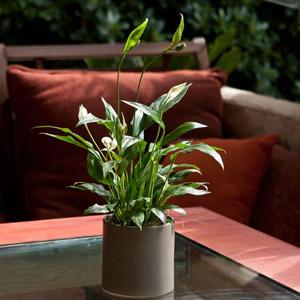 چگونه گل و گیاه در خانه پرورش دهیم؟