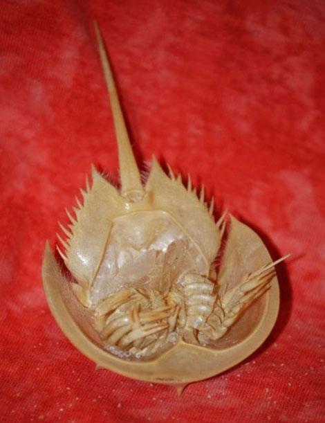 این موجود قدیمی تر از دایناسورها است (عکس)