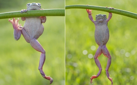 عکسهای جالب و عجیب از دنیای حیوانات