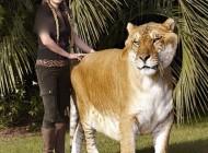 بزرگترین گربه سان در دنیا !! (عکس)