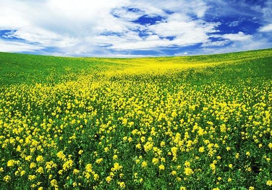 عکس های گوناگون از طبیعت زیبای جهان