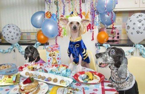 این خانم زیبا و خوش شانس ترین سگ جهان
