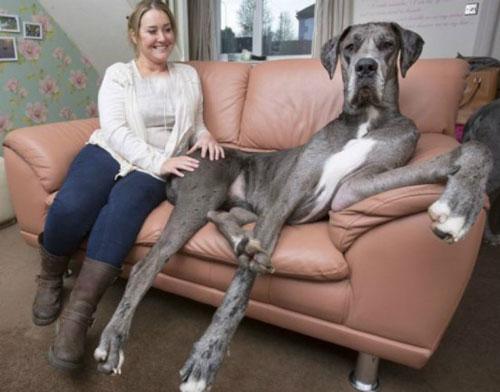 حیوان خانگی بسیار بزرگ این زن را مشاهده کنید