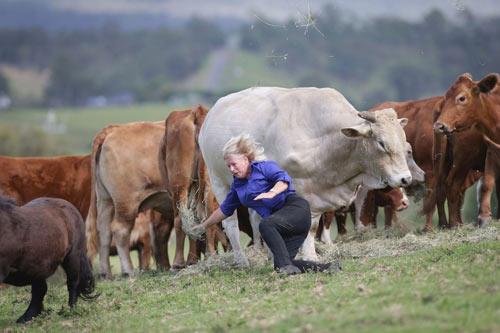 عاقبت وحشتناک پشت کردن این خانم به گاو (عکس)