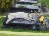 این سگ باوفا هفت سال روی قبر صاحبش خوابید (عکس)