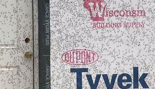 حمله میلیون ها حشره به یکی از شهرهای آمریکا (عکس)