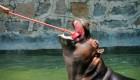 علاقه جالب این حیوان به مسواک زدن + عکس