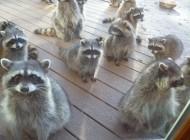عکسهای جالب و بامزه از حیوانات