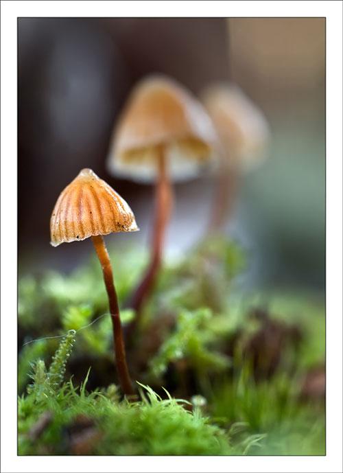 عکسهای قارچ های زیبا در جنگل
