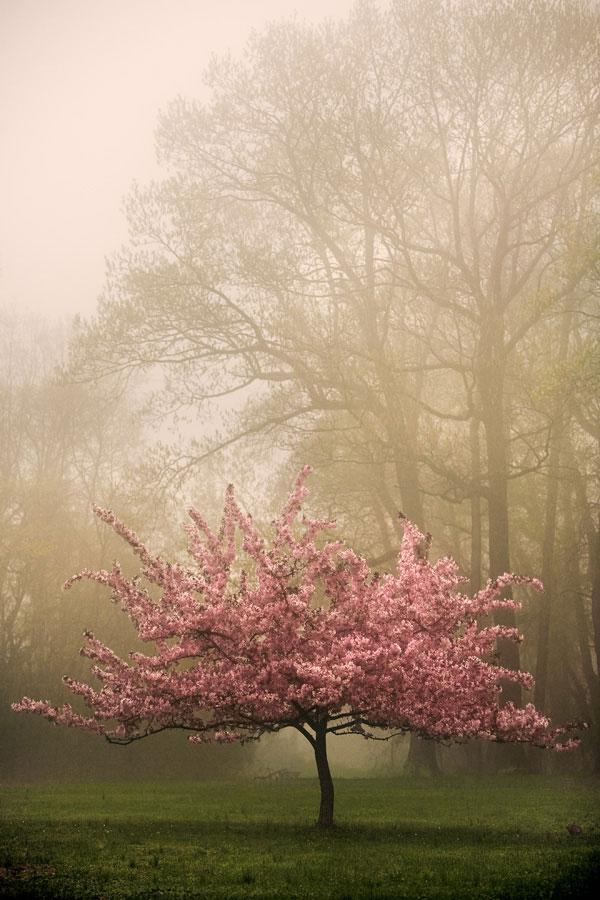 عکس زیبای طبیعت جهان