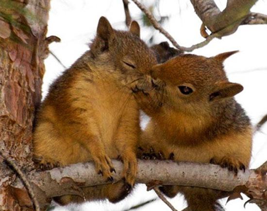 عکسهای جالب از دوستی حیوانات با یکدیگر