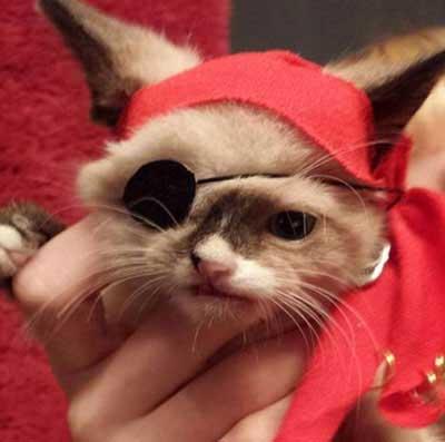 معروف شدن گربه تک چشم پدیده اینترنتی