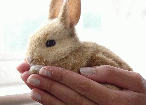 عکسهای خرگوش های ناز و زیبا