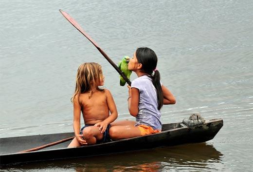عکسهای جنگل های زیبای آمازون