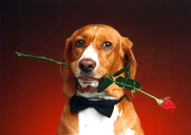 عکس سگ های زیبا