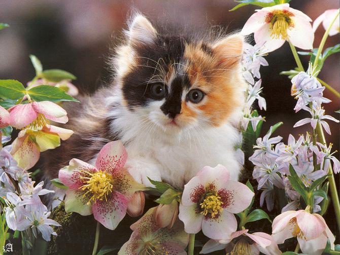 عکسهای بامزه از گربه های خانگی ناز پشمالو