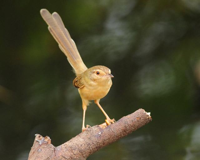 گالری عکسهای پرندگان زیبا در طبیعت -سری جدید