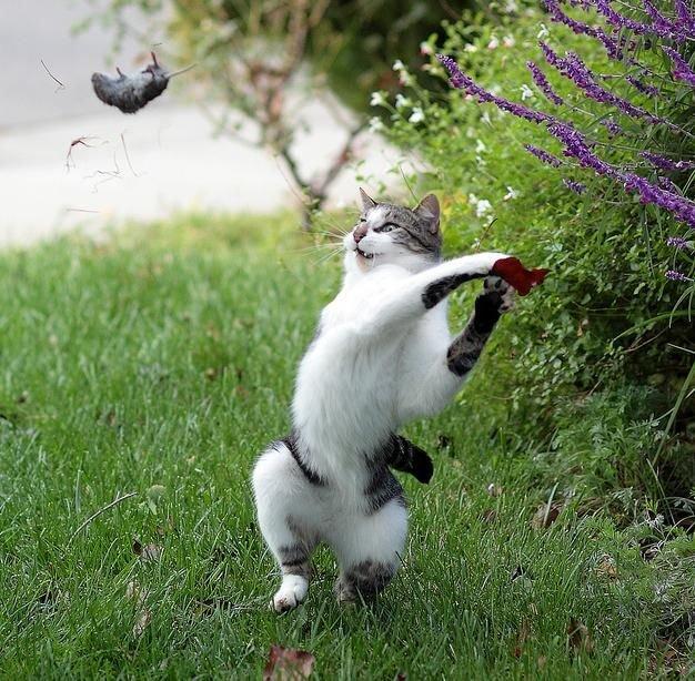گالری عکسهای حیوانات بسیار بامزه (3)