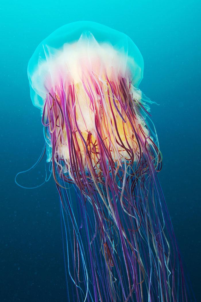 عکسهای بی نظیر از عروس های دریایی زیبا