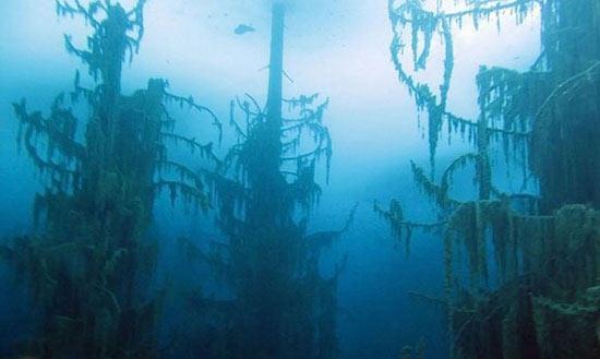جنگلی عجیب و جالب در زیر آب +عکس