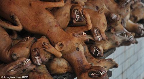 مراسم عجیب و چندش آور خوردن سگ در چین + عکس