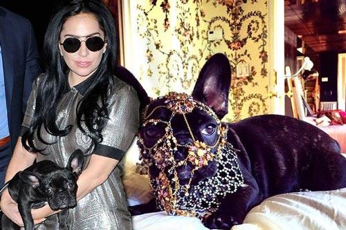 سگ طلا پوش لیدی گاگا و روسری حیوانی اش سوژه شد