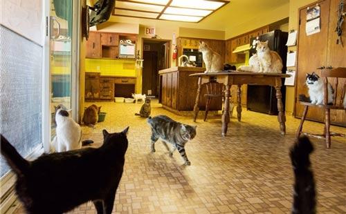 عکس هایی جالب از خانه ای با 24 هزار گربه