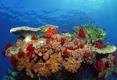 عکس های شگفت انگیز و عجیب از اعماق دریا