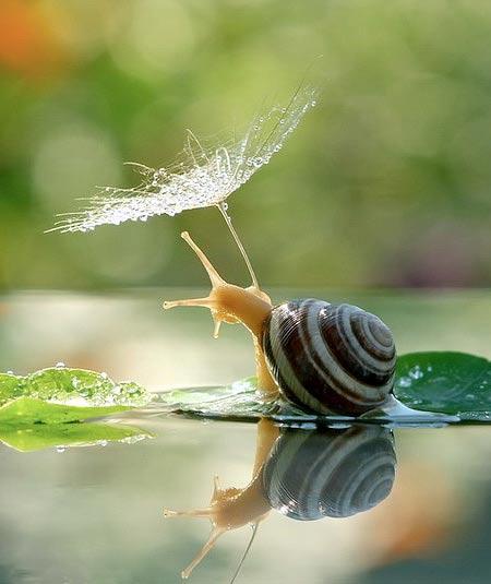 دنیای حلزون ها را در این تصاویر مشاهده کنید