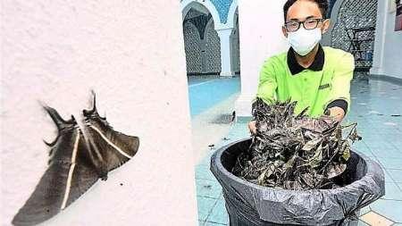 هجوم پروانه های بزرگ به یکی از شهرهای مالزی