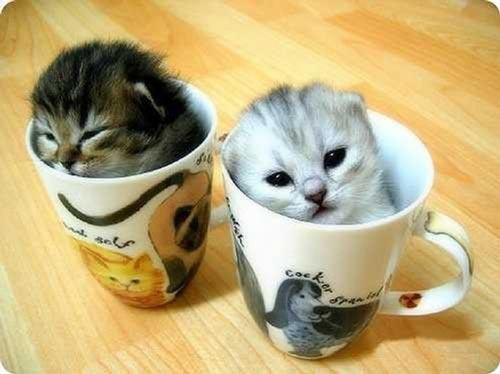 تصاویر جذاب و دوست داشتنی بچه گربه های ناز و ملوس