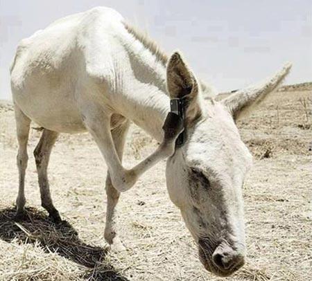 عکسهای بامزه و خنده دار از حیوانات - سری (4)