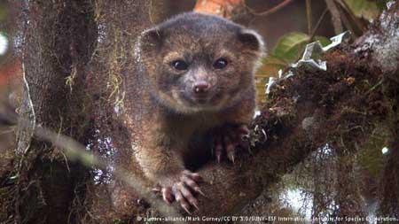 10 حیوان بسیار عجیب و غریب در دنیا + عکس