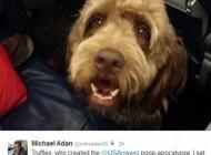 حرکت زشت این سگ باعث فرود اضطراری هواپیما شد!