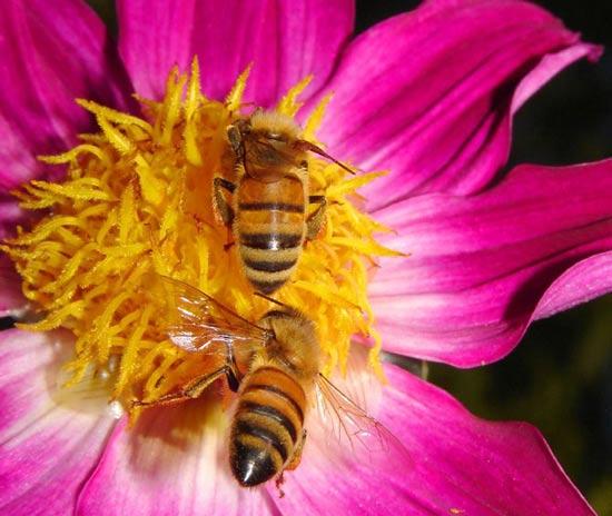عکس هایی از نمای نزدیک از حشرات و گل ها
