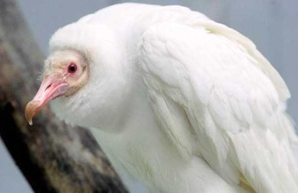 عکسهای زیبا از حیوان های مختلف سفید رنگ