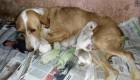 تولد بی سابقه توله سگ های سبز رنگ + عکس