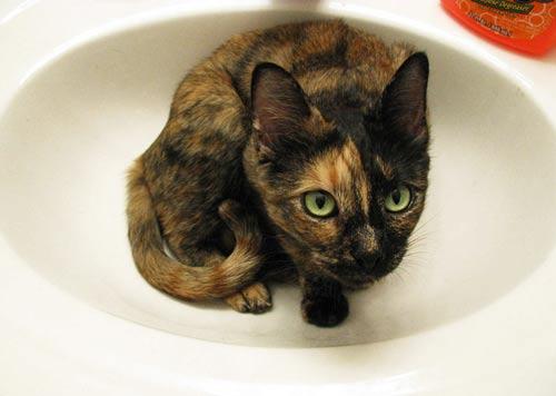 عکس های بامزه از گربه های ملوس و بازیگوش