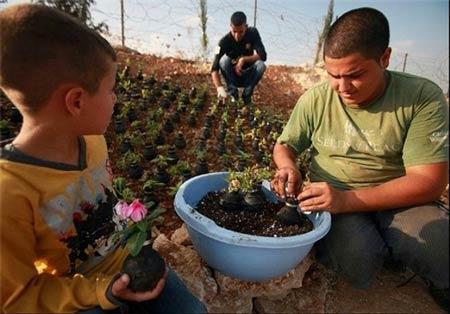 خلاقیت و نوآوری این زن فلسطینی