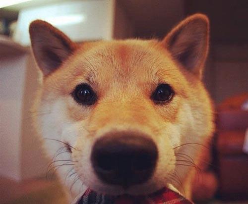 تصاویر دیدنی از جذاب ترین و خوشبخت ترین سگ جهان