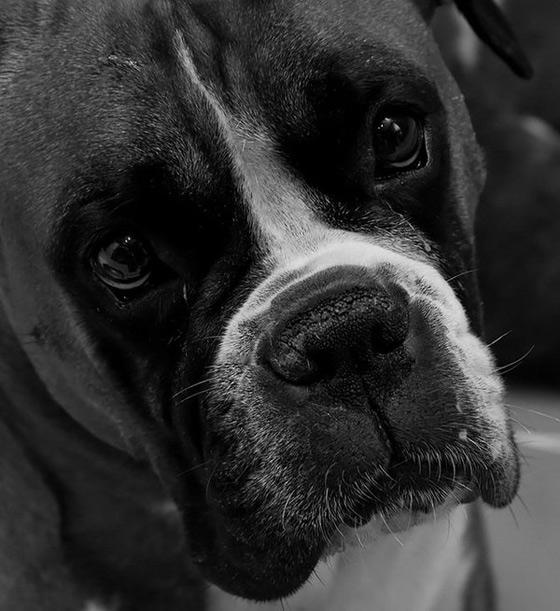 گالری عکسهای زیبا از سگ های خوشگل و بامزه