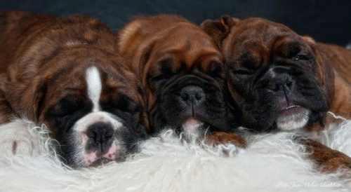 تصاویر جدید و دیدنی از سگ های خوشگل و بامزه