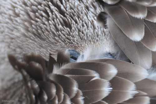 تصاویر ناب و دیدنی شکار لحظه های از حیات وحش