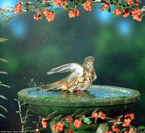 چندی از تصاویر دیدنی و شگفت انگیز از پرندگان کوچک و زیبا