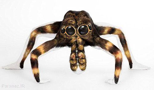 انعطاف شگفت انگیز بدن دختر عنکبوتی +عکس