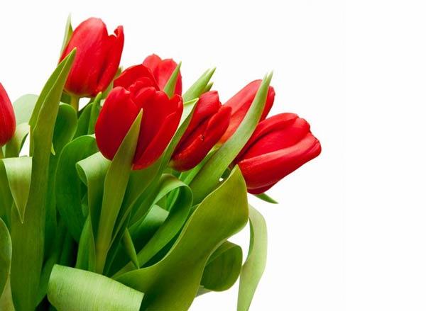 عکس گل های زیبا و دیدنی