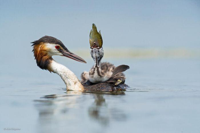 عکسهایی از شکار لحظه های دیدنی حیات وحش