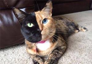 عجیب ترین گربه ای که تا کنون دیده اید