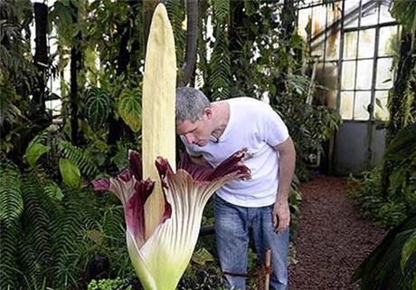 رونمایی عجیب ترین گیاه دنیا + عکس