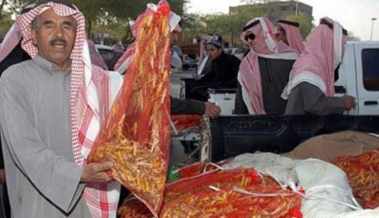 شروع مصرف ملخ در عربستان با آمدن ماه مبارک رمضان
